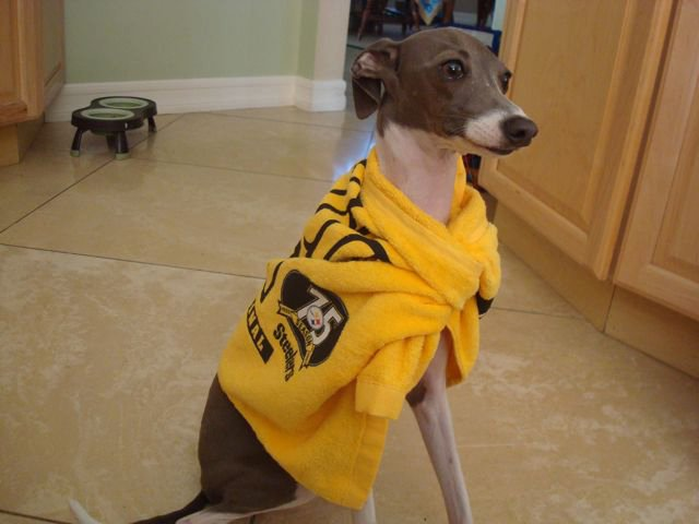 Izzy Terrible Towel
